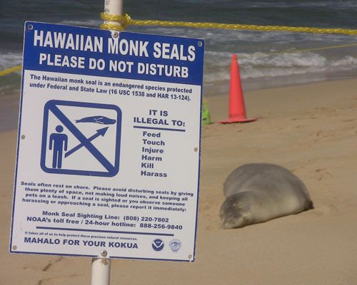 Video: Protecting Seals on the Beaches