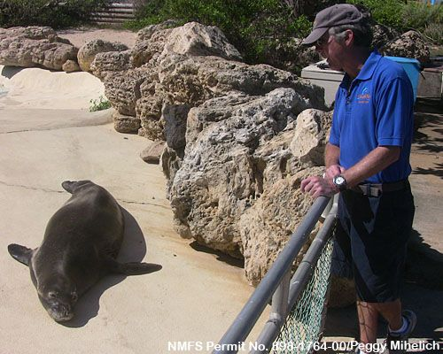 Video: Monk Seals in Captivity