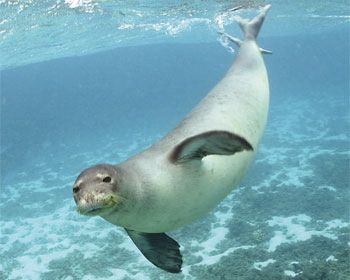 Chapter 2 - Monk Seal 101